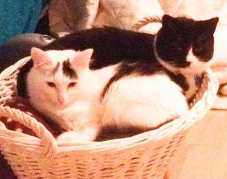 Cumnock and Doon Valley Cats Protection: Leo and Prince.