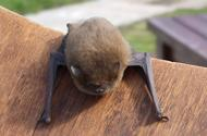 Celebrate International Bat Weekend with some special events locally.