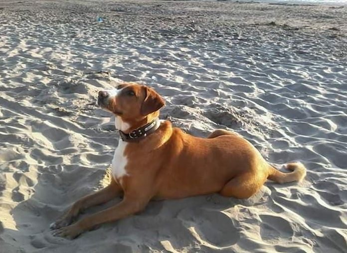 Heartbroken disabled dog owner gives away pet food after her rescue dog dies